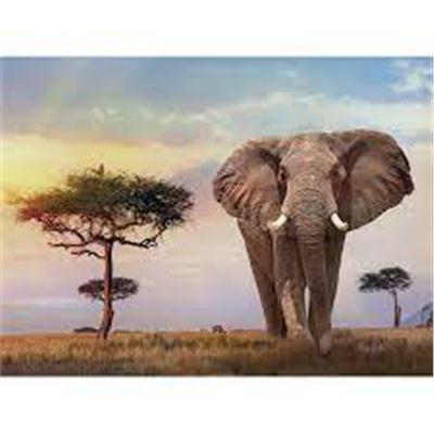 500 puesta de sol en africa - 06635096